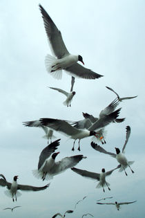 Flock of seagulls by bob bingenheimer