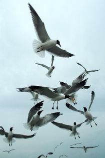 Flock of seagulls von bob bingenheimer
