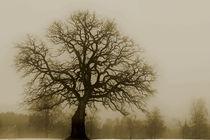 The old tree von Willy Marthinussen
