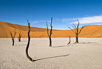 Dead Desert Trees at Dead Vlei by Russell Bevan Photography