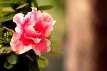 Flower and dreams  von Manuela Russo
