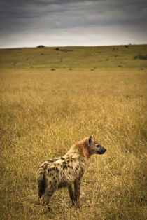 Lone Spotted Hyena von Russell Bevan Photography