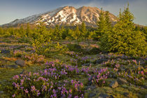 Mount St Helens south side spring morning by Ed Book