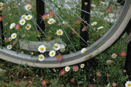 Daisy-wheel