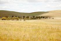 Rolling hills of farmland - Burra, Australia by Jess Gibbs