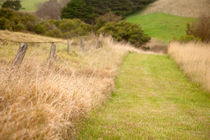 Mown path through the grass - Flinders, Australia by Jess Gibbs