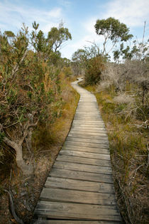 WInding boardwalk across the scrub - Freycinet, Australia von Jess Gibbs