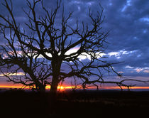 Tree And Sunset Sky by Paul Lemke