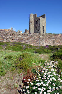 Wheal Coates Spring von Mike Greenslade