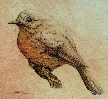 Robin2-copy