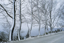 Trees von George Grigoriou