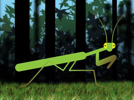 Mantis-01kopie