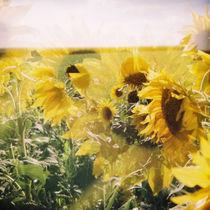 holga sunflowers von oblivion head
