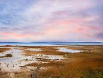 Marshy Seascape by Paul Lemke