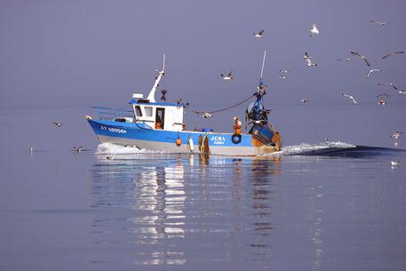 Boat-gulls1686