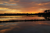 Rice Paddy Sunset by Mike Greenslade