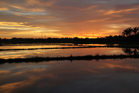 Rice-paddy-at-sunset-0393