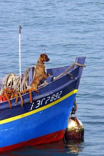 Sea-dog3-1728