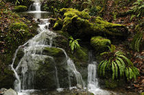 stream and moss by Jean du Boisberranger