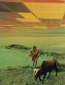 Shepherd Of The Plains by Jesse  Treece