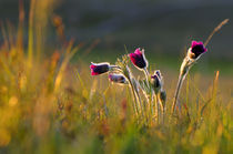 bunch of wild flowers von Jean du Boisberranger