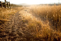 Golden afternoon light over a country path - Truckee, California.