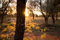 Sun goes down over the desert - Mungo, Australia by Jess Gibbs