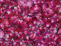 Flower Petals by James Menges