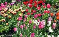 Eden Tulips von Mike Greenslade