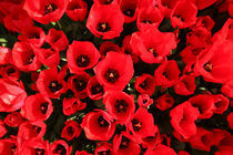 Red Tulips von Mike Greenslade