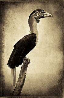 'Finer Feathered Friend 7 (sepia)' by Alan Shapiro
