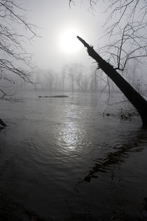 Fog on the Shenandoah River von Douglas Graham
