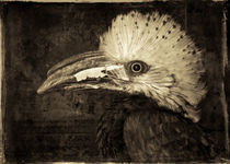 'Finer Feathered Friend 4 (in monochrome)' by Alan Shapiro