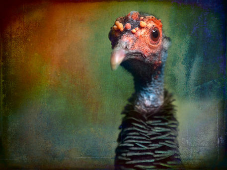 Finer-feathered-friend-3