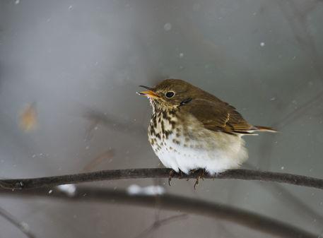 Birds-3-021010