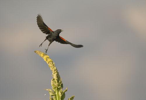 Birds-13-062309