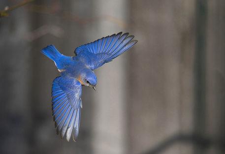 Birds19-040909