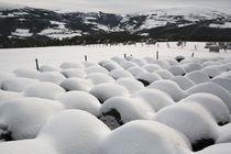 Snow by Xulio Villarino