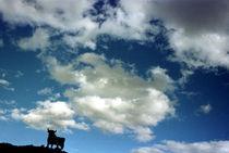 Bull by Xulio Villarino
