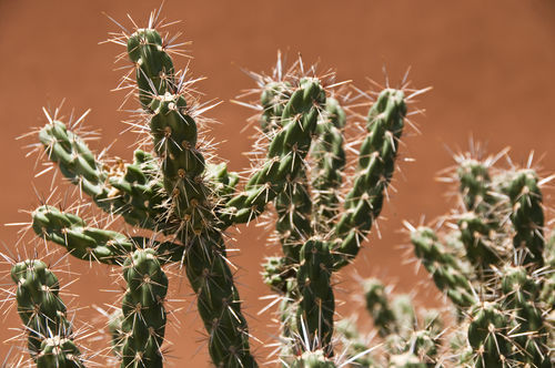 0002-cactus-coronado-state-park-new-mexico