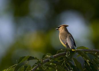 Birds-13-051510