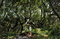 Ocracoke Island, North Carolina von Douglas Graham