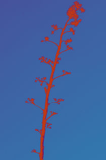 Bird on a tree in red by Ricardo Anderson