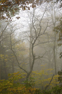 Fall forest scene by Carl Tyer