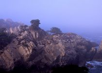 Point Lobos #6 von Ken Dvorak