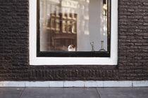 frames by Stefanie Höpner