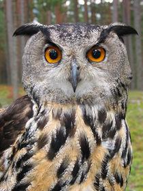 Big owl