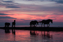 Sunset horses by Mati  Kose
