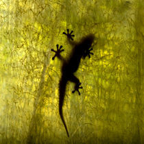 The Gecko in Green von Simon Littlejohn