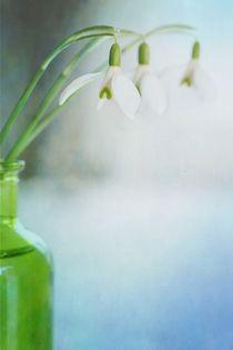 Frühlingsfrisch von Priska  Wettstein